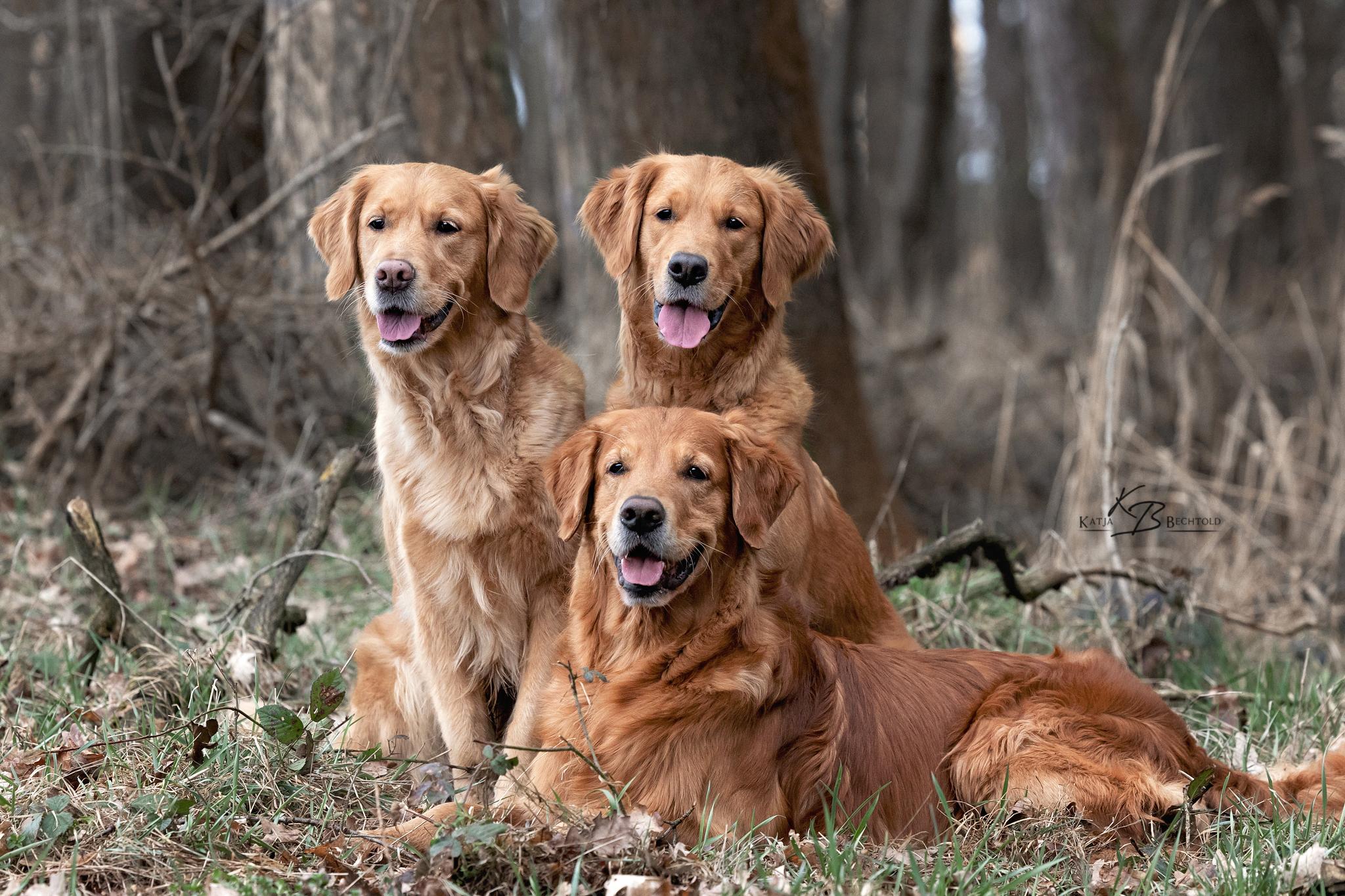Phinegean, Gwendy und Shila