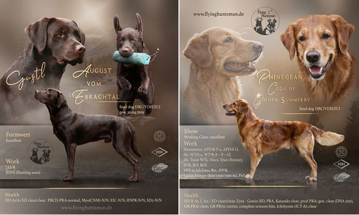 Two stud dogs announcement by Katja Bechthold for Phinegean Coda of Golden Summerby and August (Gustl) vom Ebrachtal