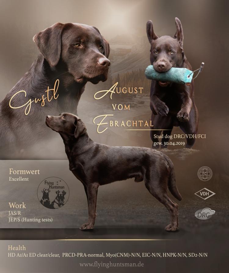August (Gustl) vom Ebrachtal - Stud dog in the DRC (German Retriever Club) VDH/FCI