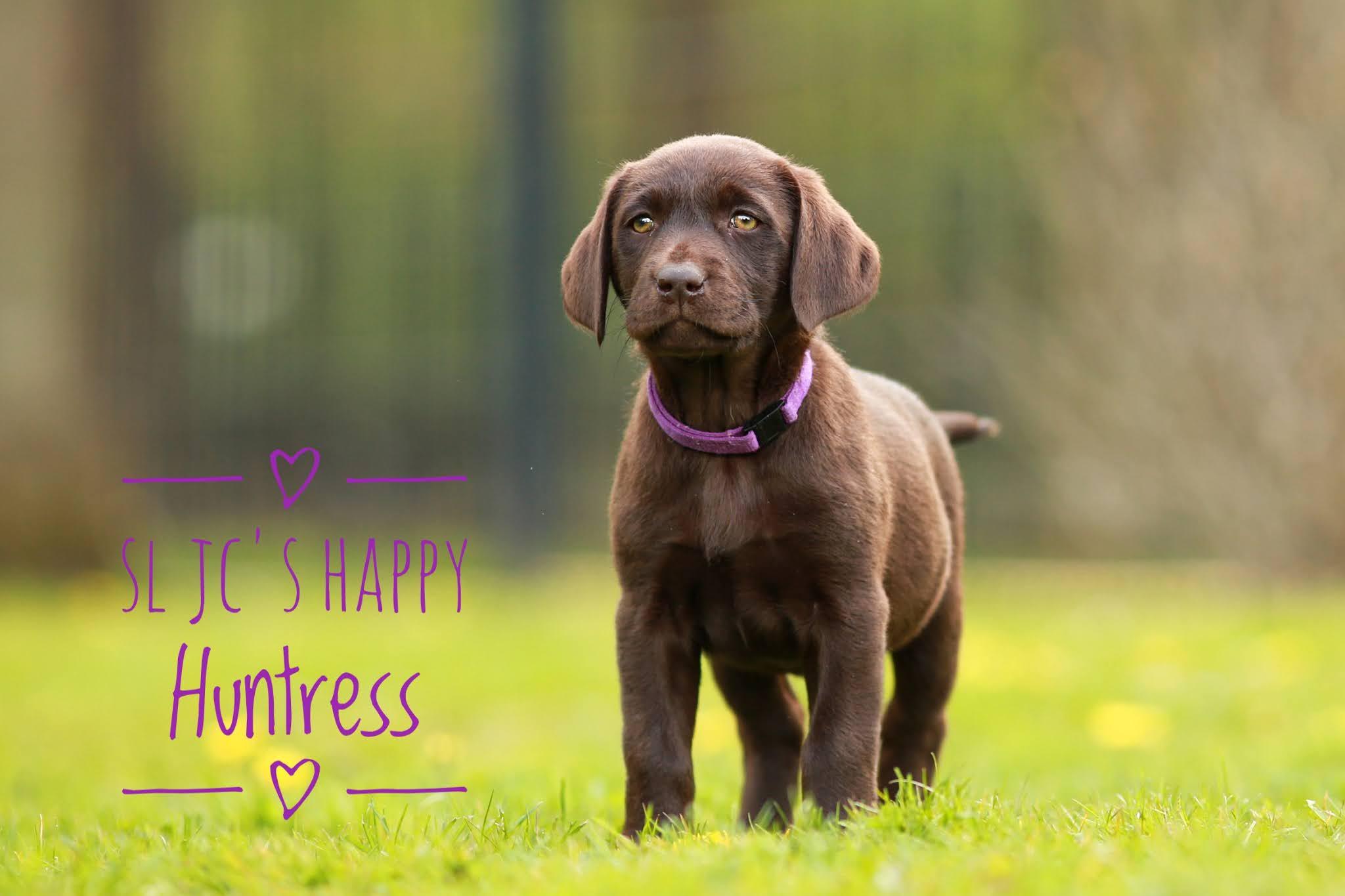 SL JC´s Happy Huntress verstärkt das eigene Rudel und wird, genau wie Digger, Ralf´s Hund.