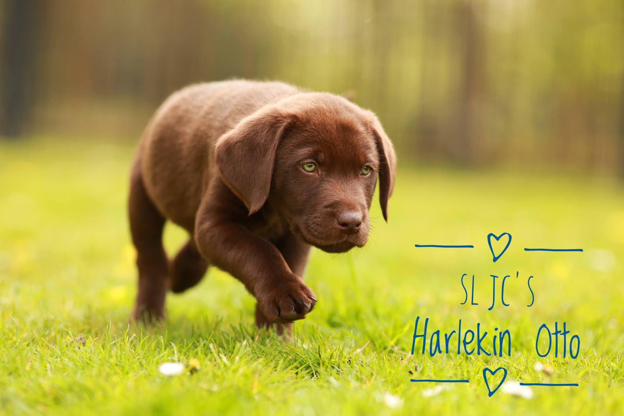 SL JC´s Harlekin Otto wohnt jetzt bei Stefanie und Kai in Bochum